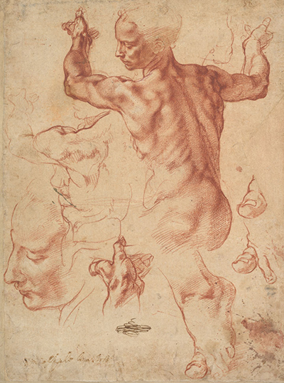 Studies for the Libyan Sibyl Michelangelo